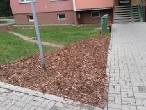 Výsadba vzrostlých stromů a keřů