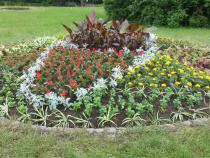 Výsadba květinového záhonu v Rožnově pod Radhoštěm.