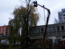 Pokácení vzrostlého, nemocného javoru na ul. Boženy Němcové.