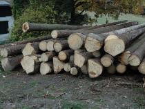 Výzva k podání návrhu na uzavření kupní smlouvy na 1 500 m3 dřevní hmoty, pro 2. čtvrtletí 2017.